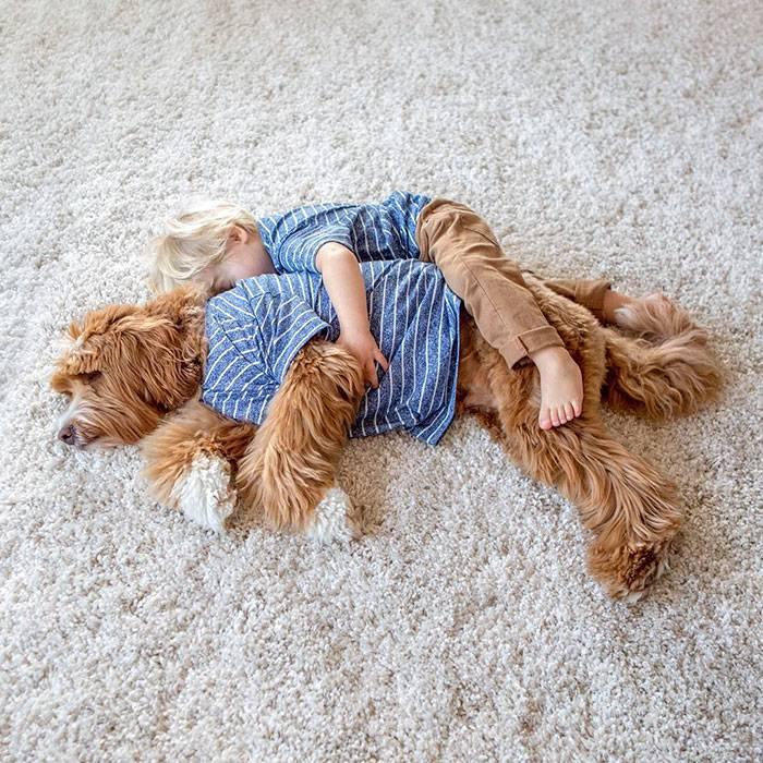 foster-child-labradoodle-dog-book-buddy-reagan-27