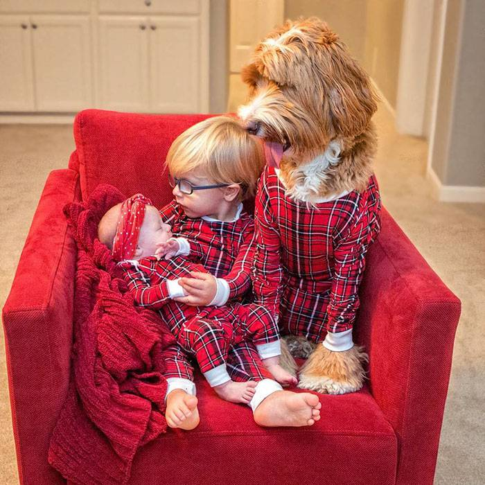 foster-child-labradoodle-dog-book-buddy-reagan-29