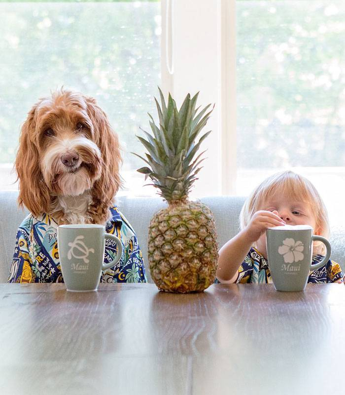 foster-child-labradoodle-dog-book-buddy-reagan-3