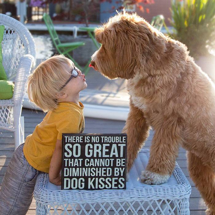 foster-child-labradoodle-dog-book-buddy-reagan-5