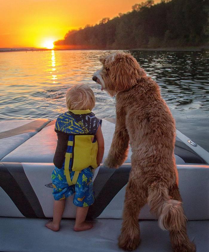 foster-child-labradoodle-dog-book-buddy-reagan-7
