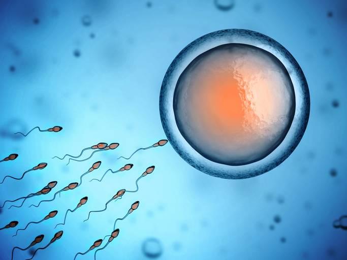 concepimento e spermatozoi