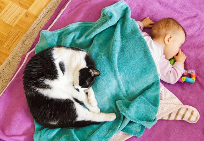 neonato soffocato da un gatto