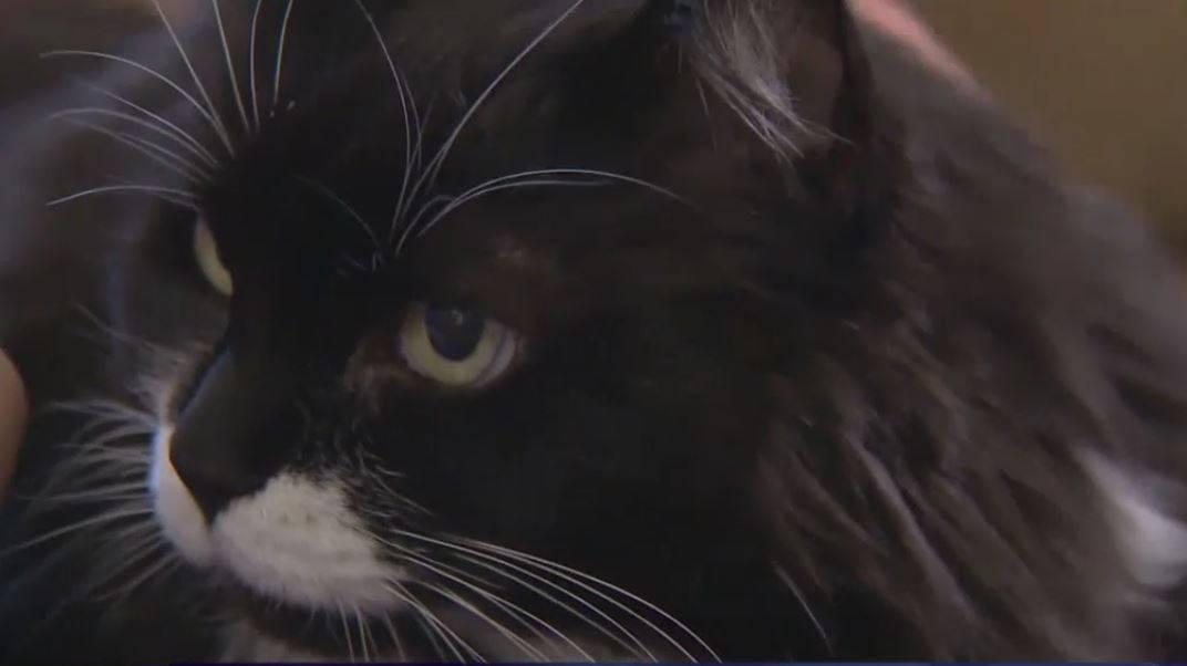 gatta scopre tumore al seno