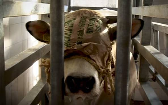 tortura animali macelli 3