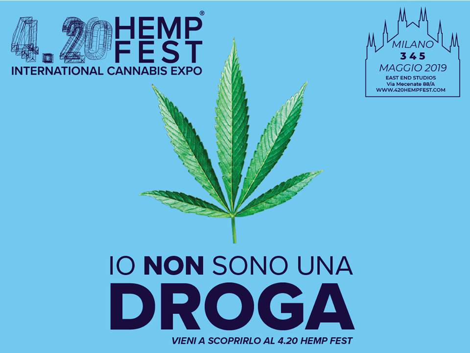 cannabis droga