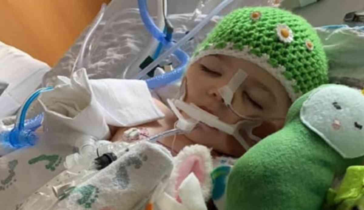 bambina di 2 anni dona organi 3