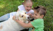 benefici del cane