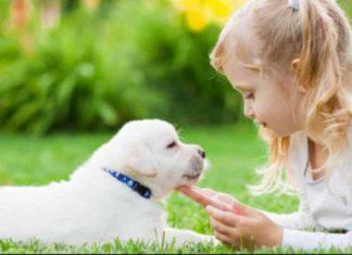 disinfettare animali