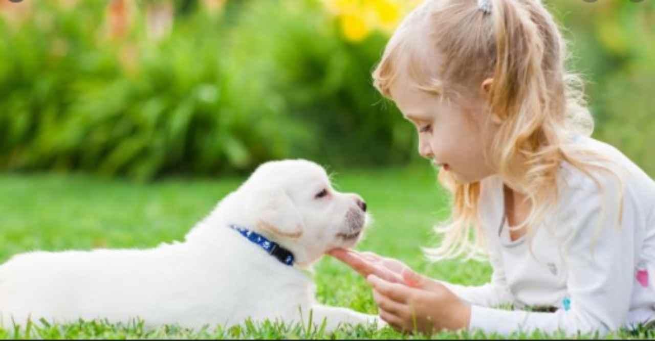 Disinfettare gli animali durante l'epidemia: i consigli del Ministero