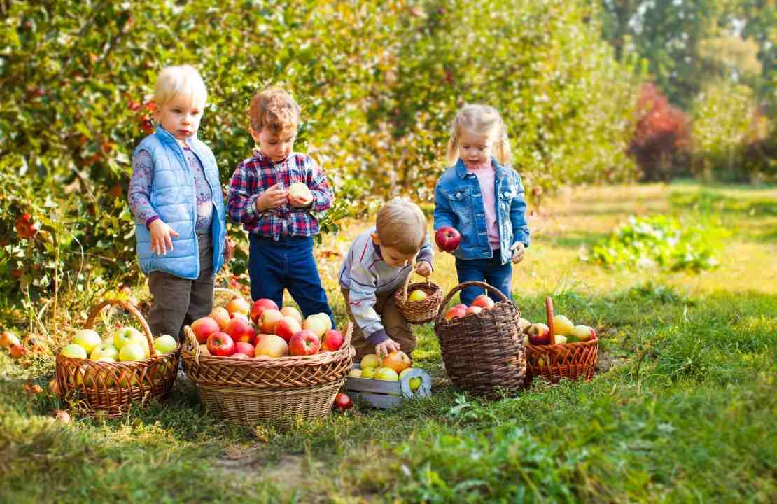Fase 2 | Fattorie  didattiche per bambini: l'iniziativa in Veneto | FOTO