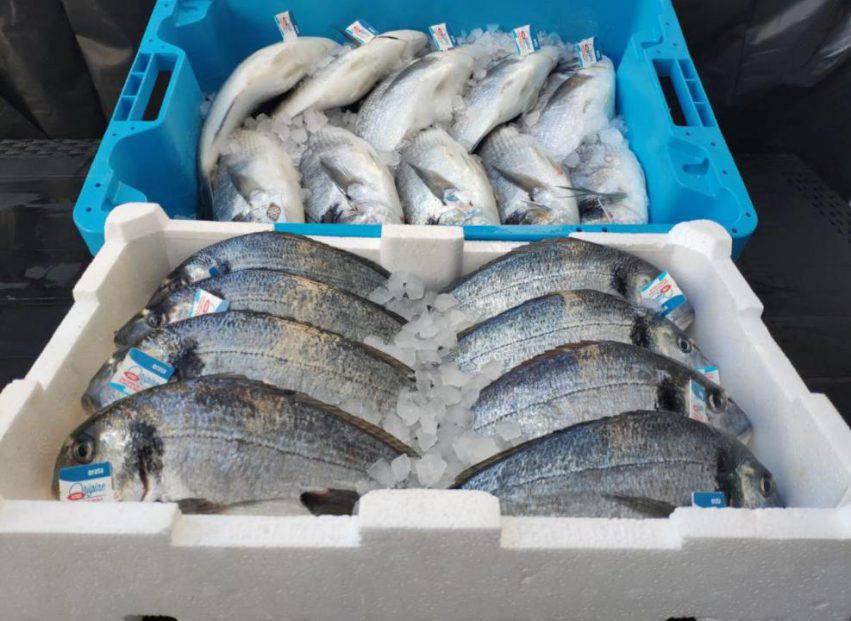 pesce pescatori