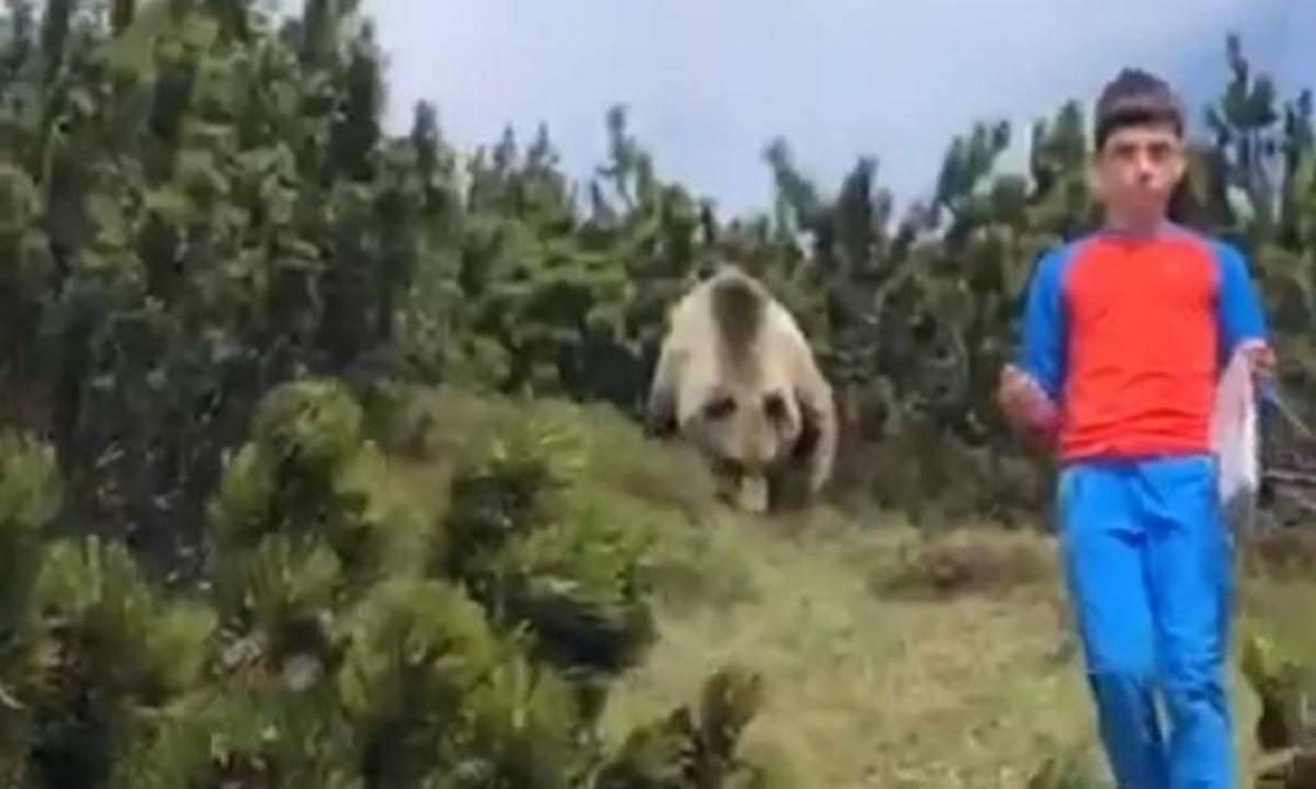Bambino incontra orso