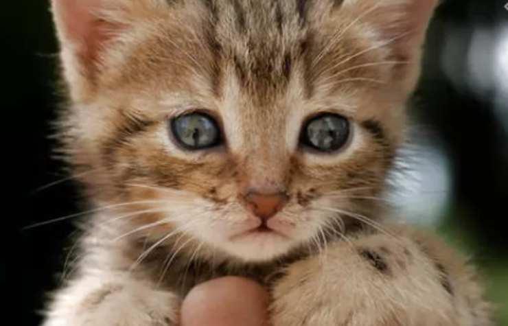 bambino gatto balcone