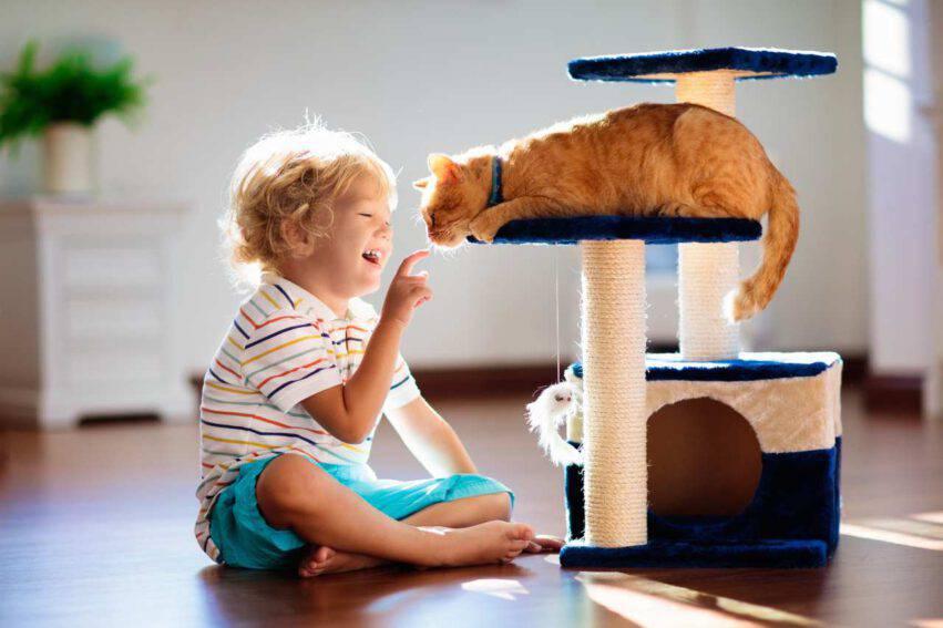 bambino getta gatto dal balcone