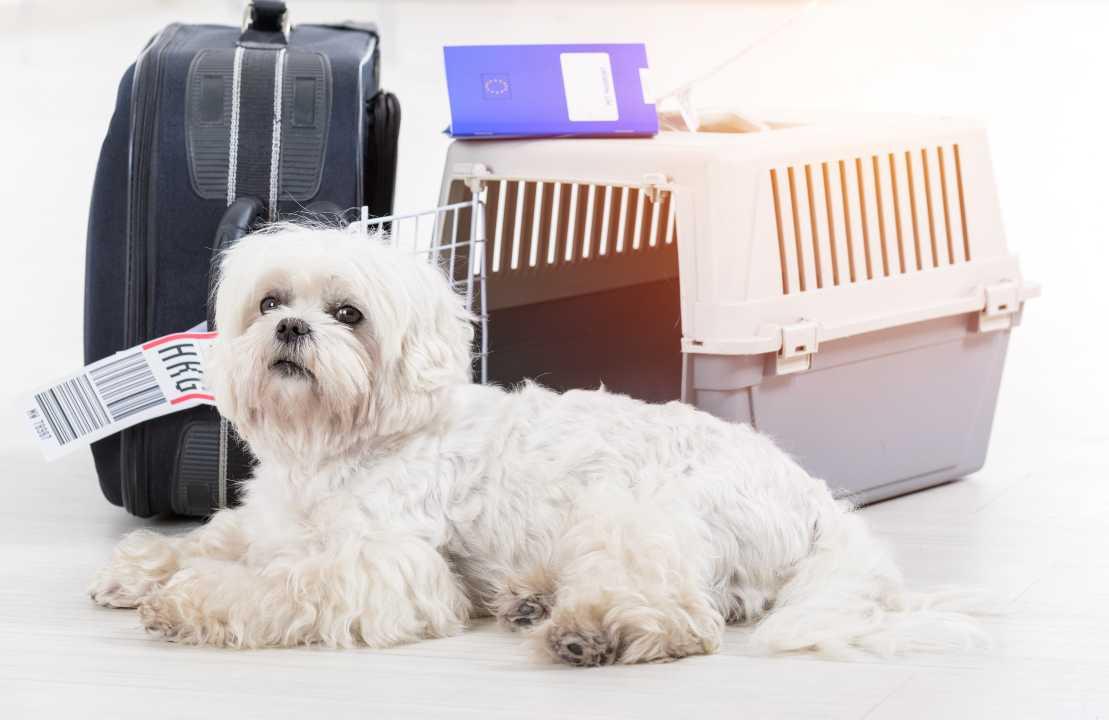 come viaggiare cane