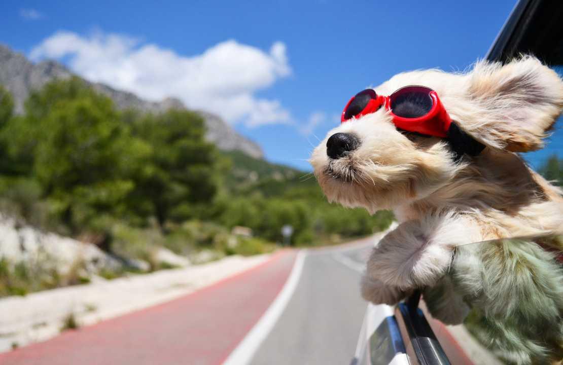 Viaggiare con un cane in famiglia, auto aereo treno o nave?