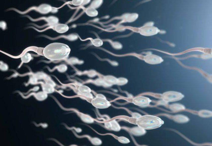 qualità sperma
