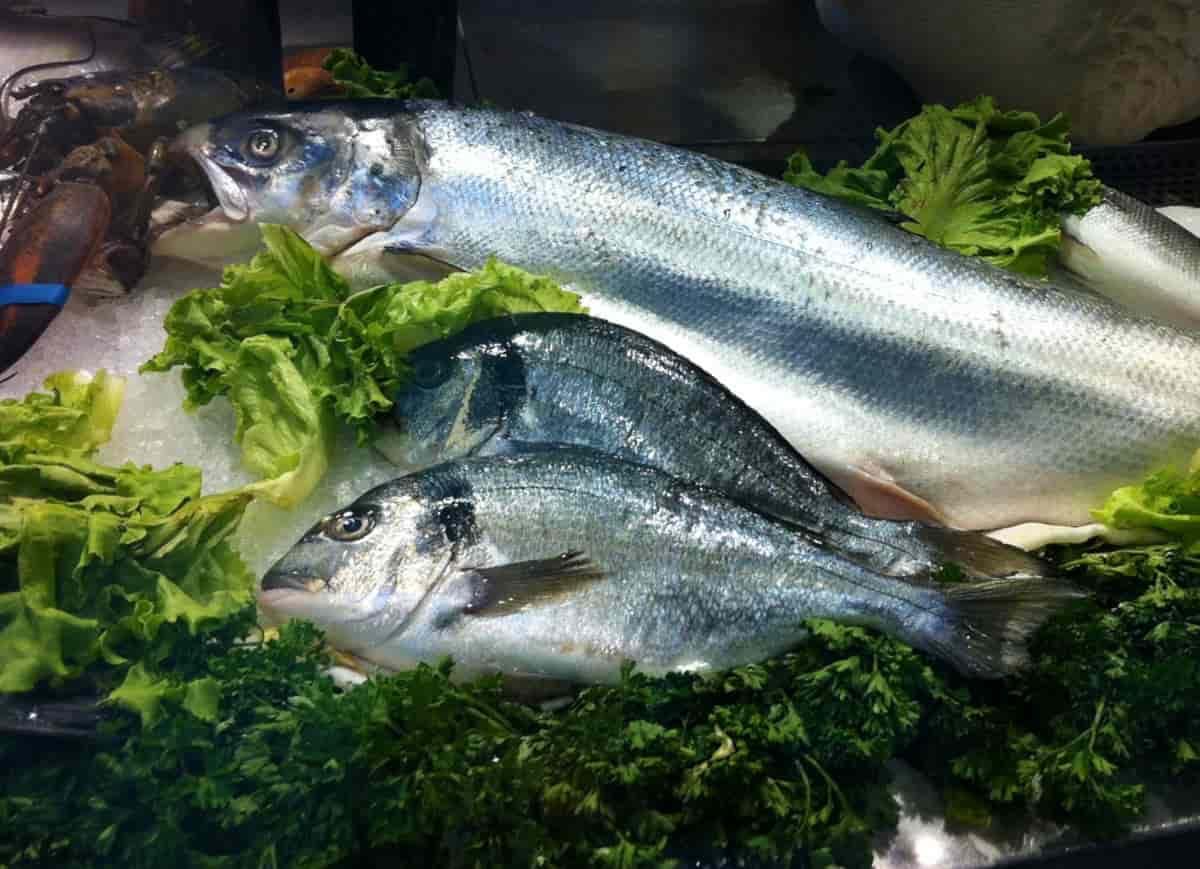 pesce gravidanza mercurio
