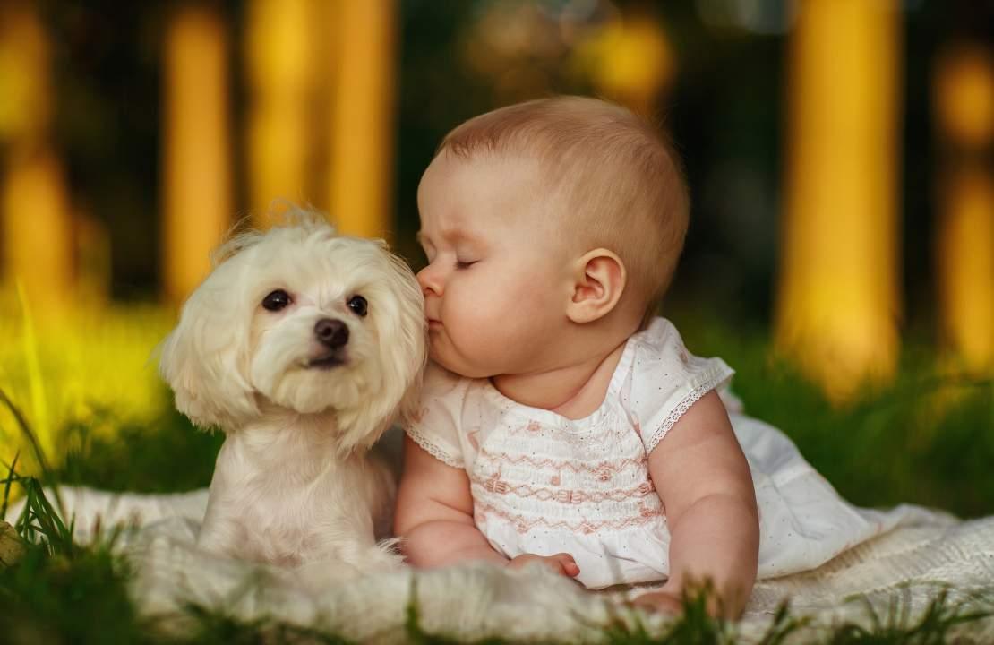 come scegliere cane famiglia
