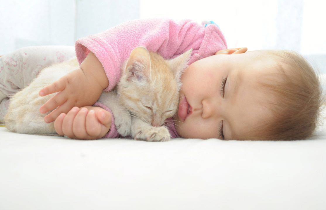 gatti bambini
