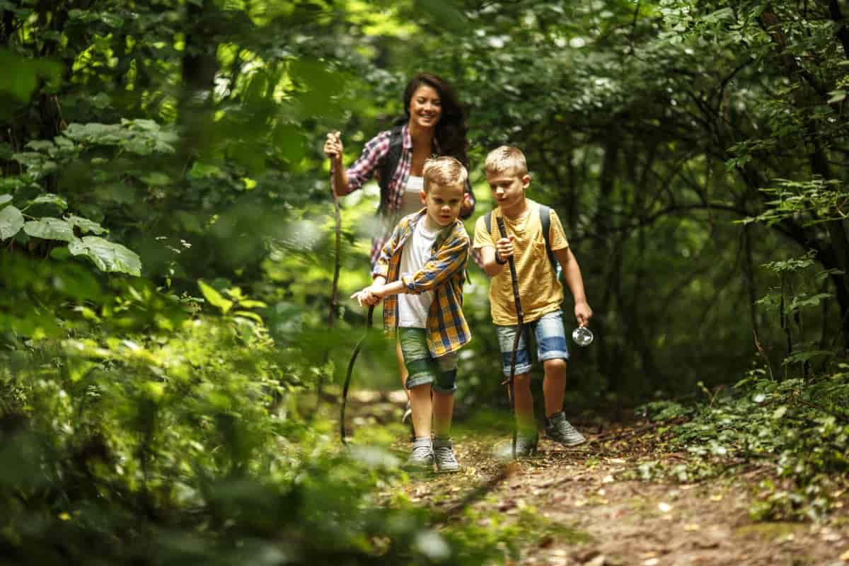 viaggio bambini boschi incantati