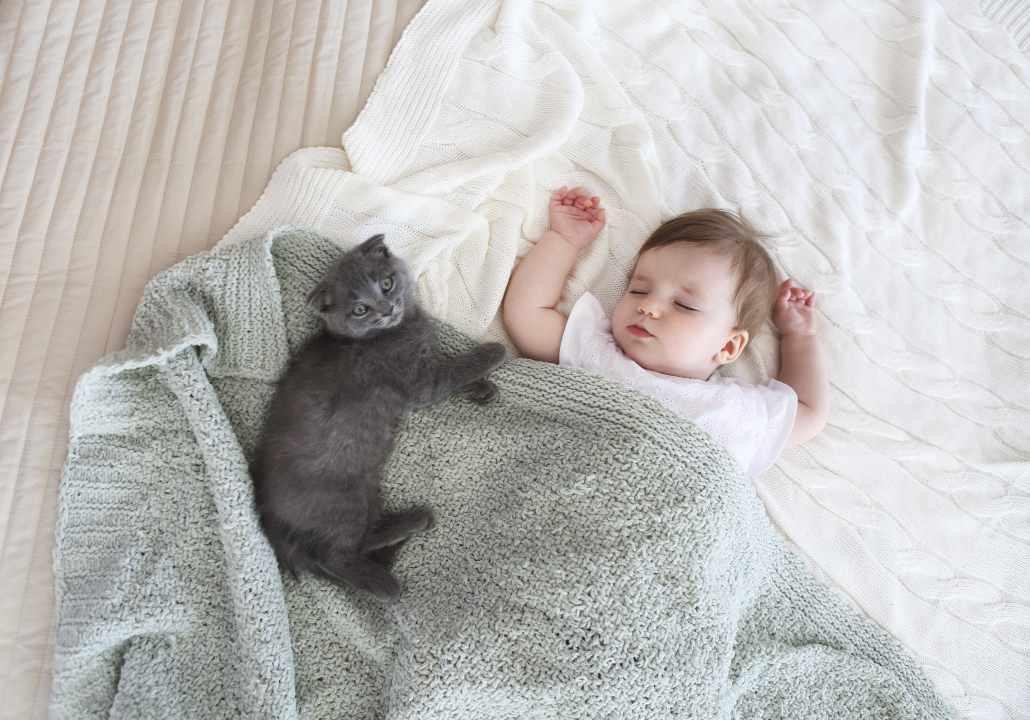 gatti arrivo neonanto