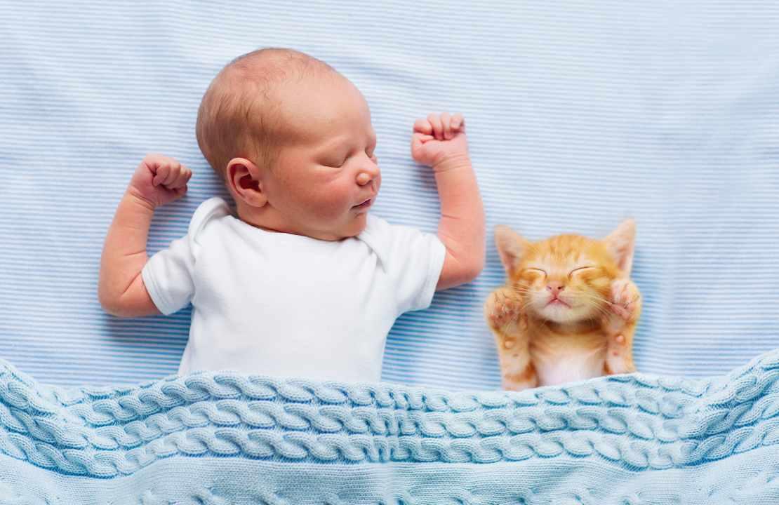 gatti neonati consigli