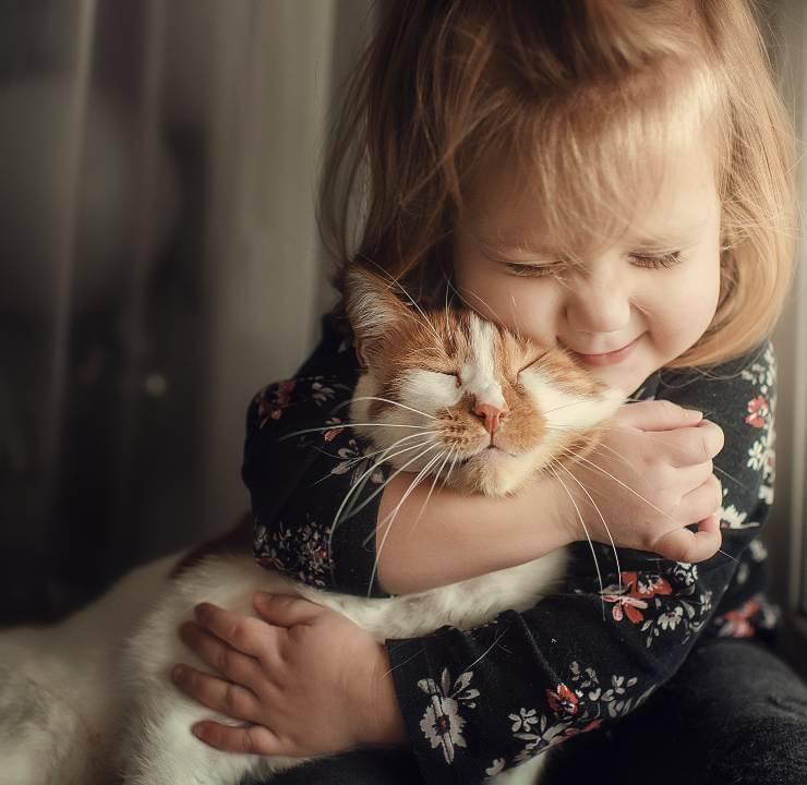 gatti bebé