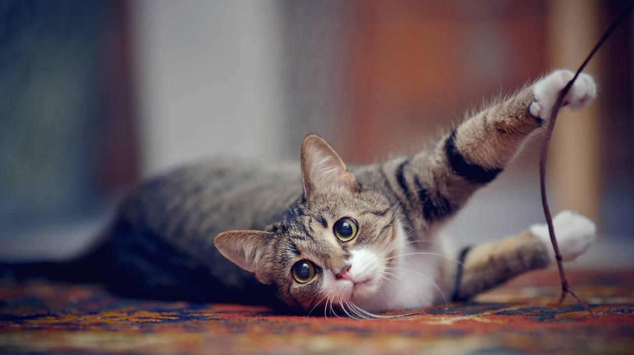gatti maestri vita