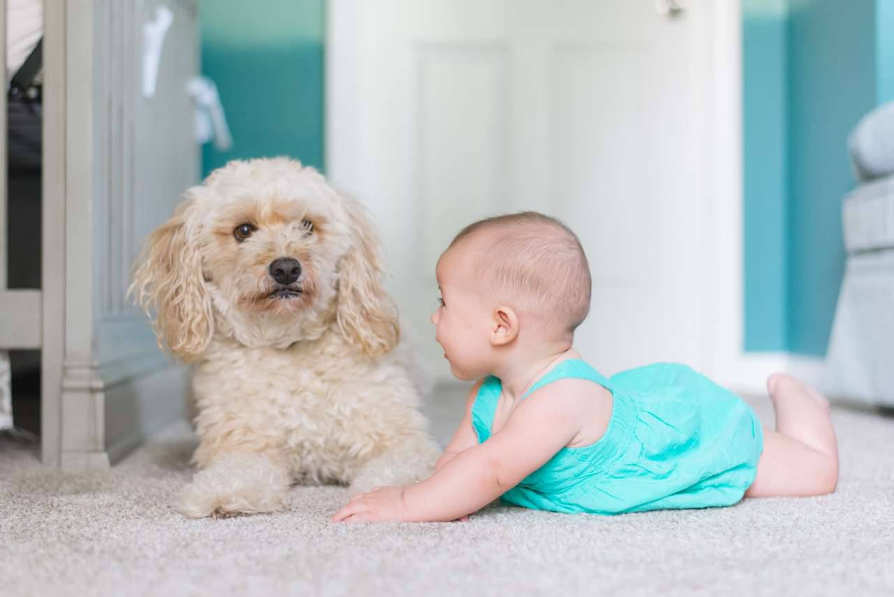 Animali e bambini (fonte unsplash)
