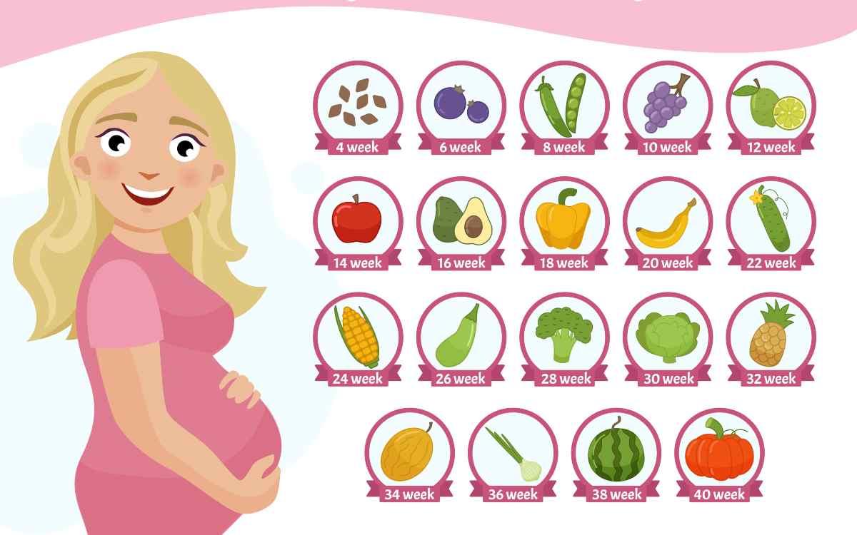 misure del feto nel terzo trimestre cavolo rapa a zucca