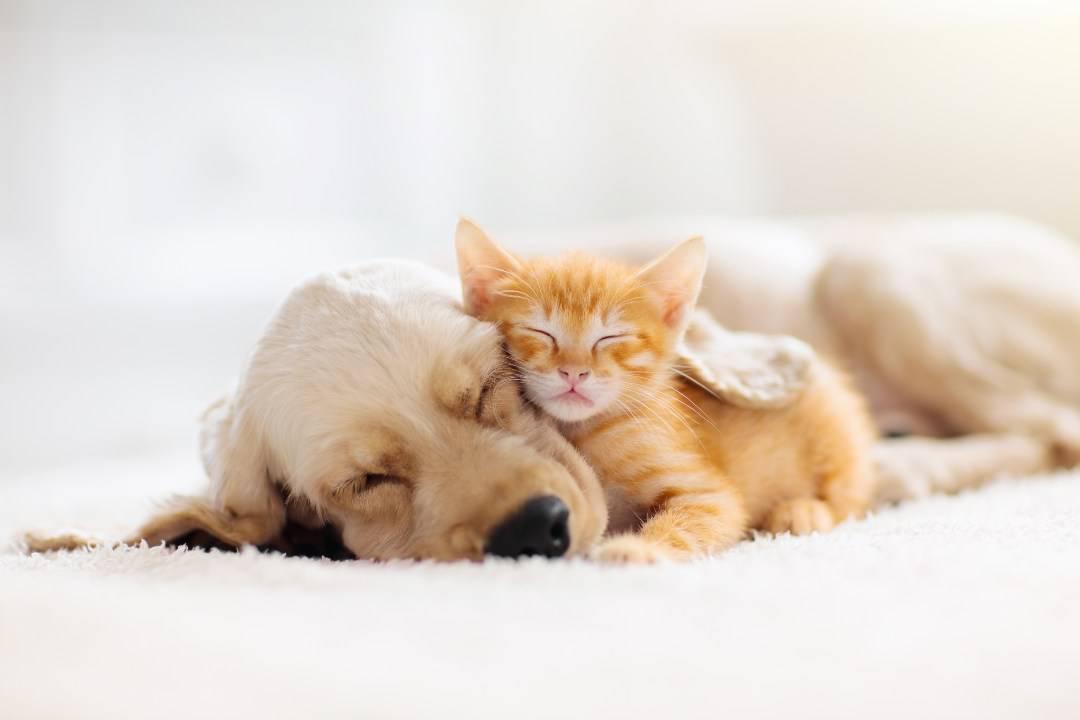 possono convivere gatti