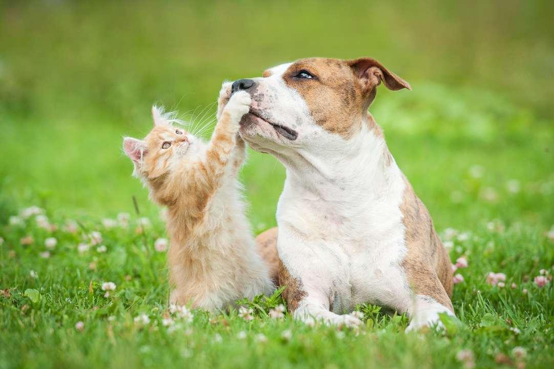 possono cani e gatti