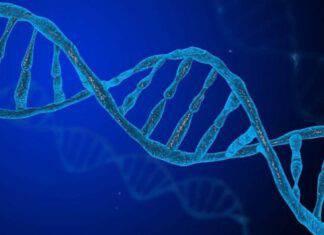 Dna mitocondriale negli spermatozoi (fonte Instagram @geneticsinfo)