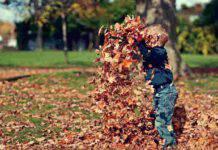 Fare il decoupage con le foglie (fonte unsplash)