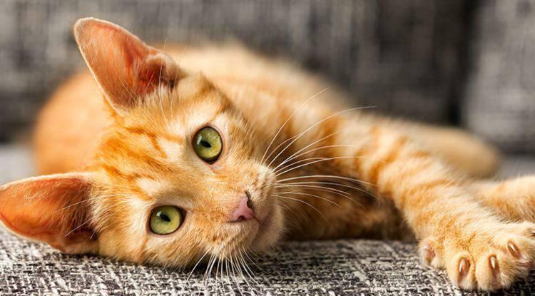 Giornata del gatto i costi