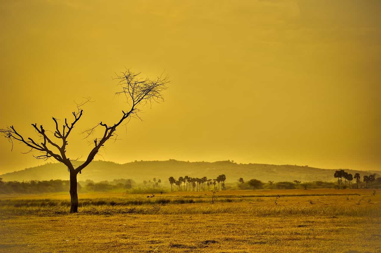 cambiamento climatico pandemia