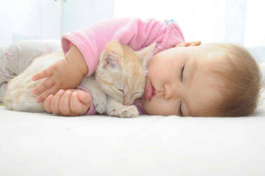 gatto con bambino dormono